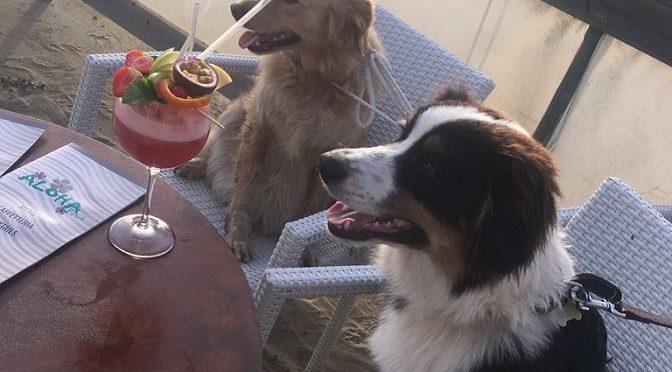 aperitivo per cani viareggio