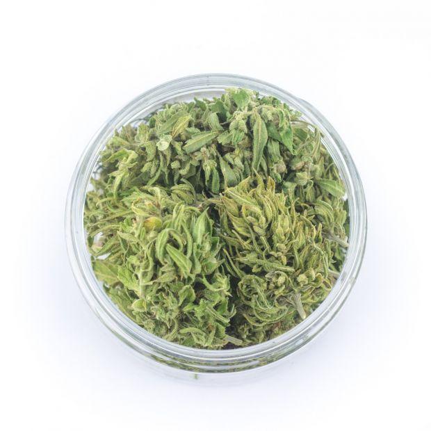 cannabis legale easyjoint