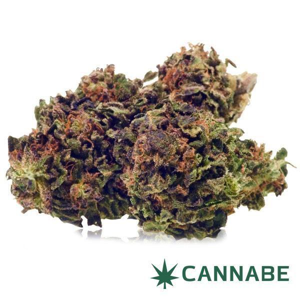 miglior negozio cannabis in italia